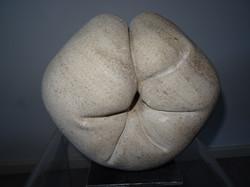 Fleur calcaire