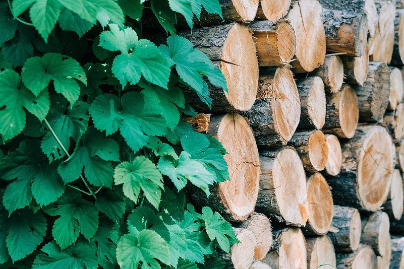 Wood Pile at Hillside Lodge