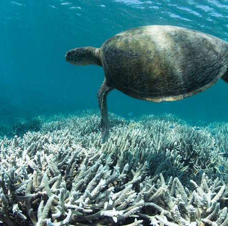 The Destruction of the Coral Reefs