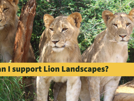 How Can I Support Lion Landscapes?