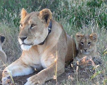 Labai and 6 month cub.png