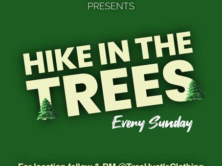 HIKE IN THE TREES (SUNDAZE)