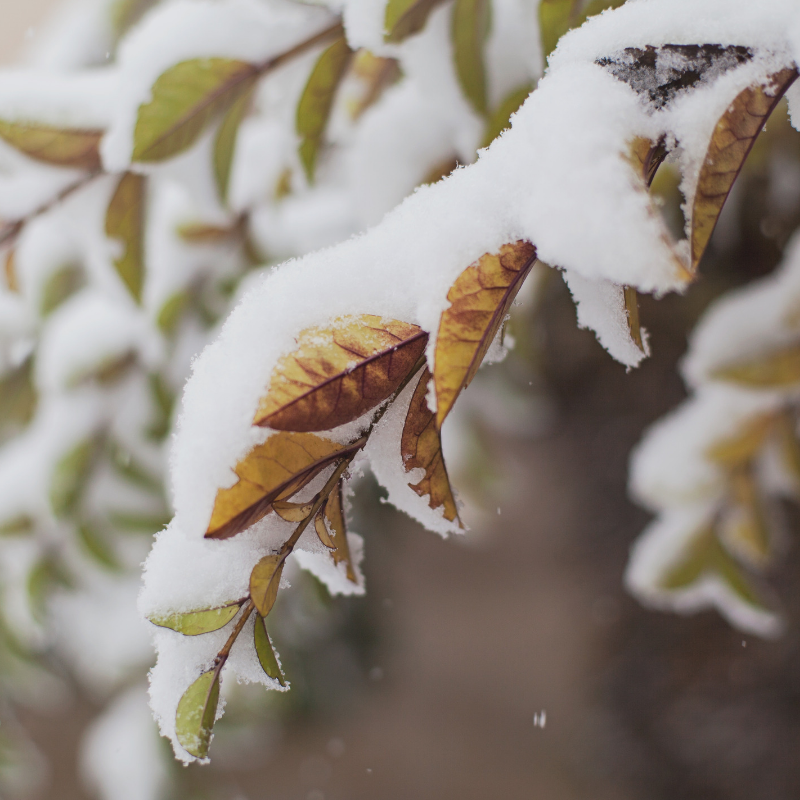 trim back branches to protect home from snow damage