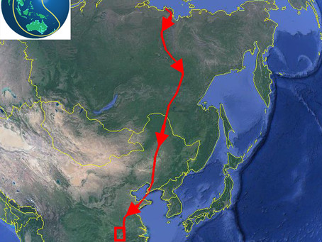 New Collaboration: Migratory Geese in the East Asian/ Australasian Flyway