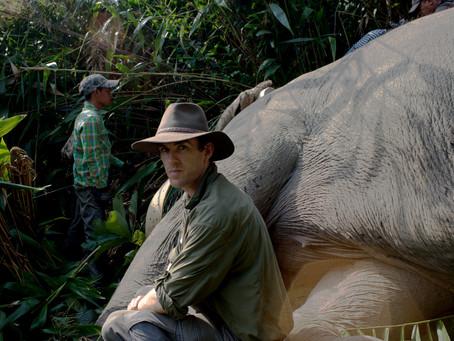 Elephants on the Radio: Freedom of Species