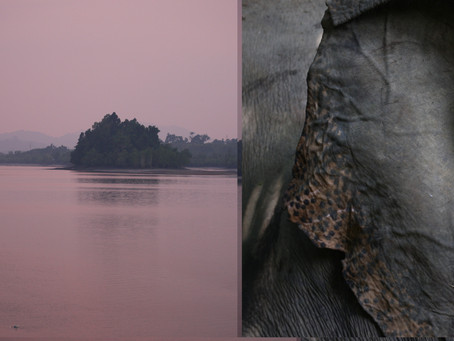 In The Footprints of Giants: Tracking Elephants in Myanmar