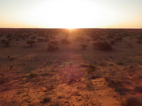 New Publication: Nocturnal Nomadic Desert Ducks