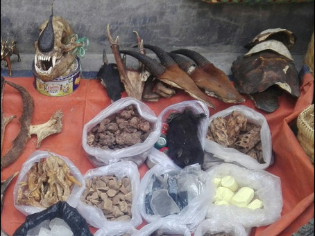 New Publication: Illegal Wildlife Trade in Myanmar