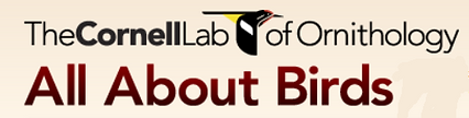 The-Cornell-Lab-of-Ornithology-All-About