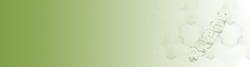 New Corvus Web Banner 11