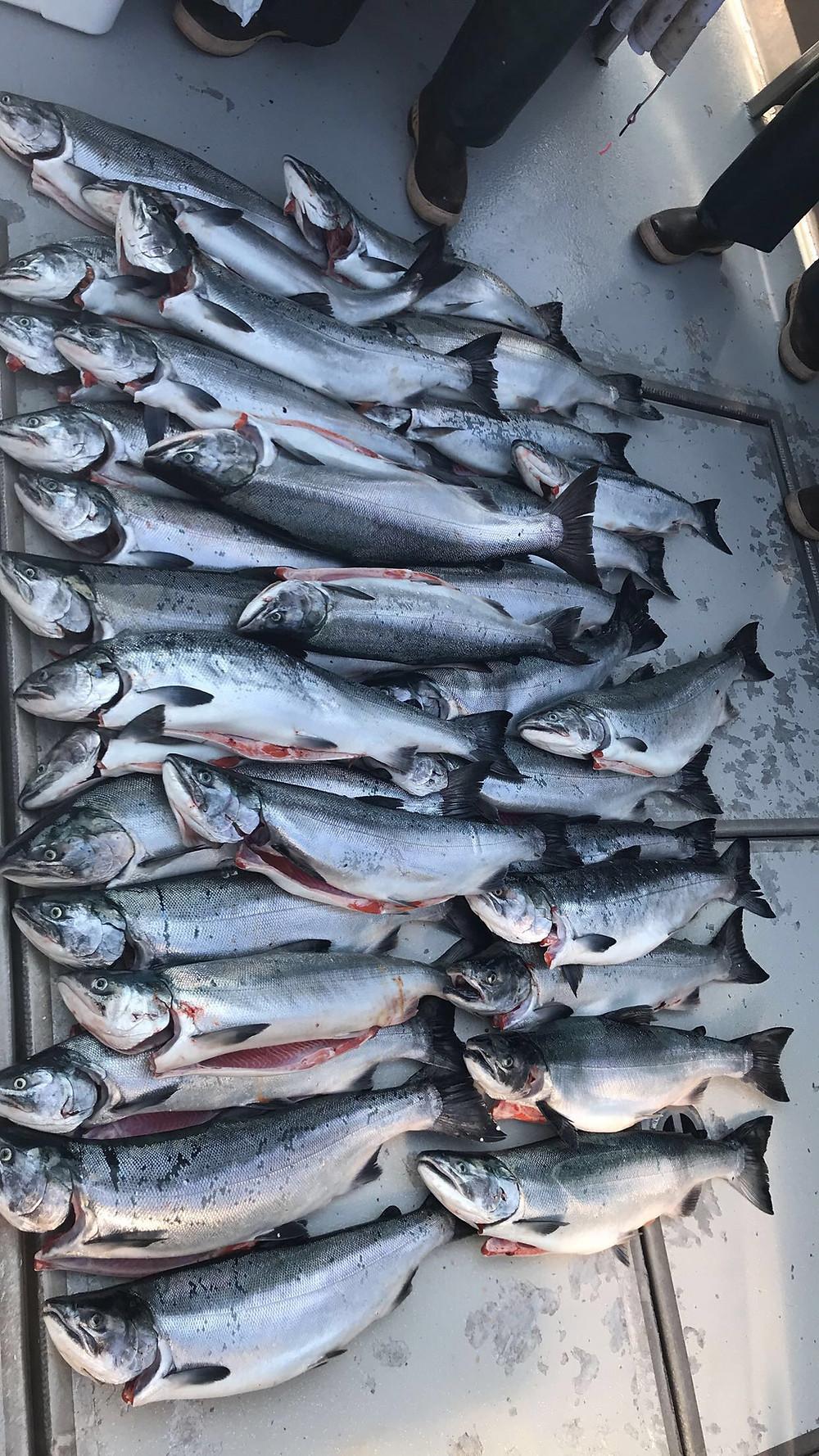 alaska fishing lodges