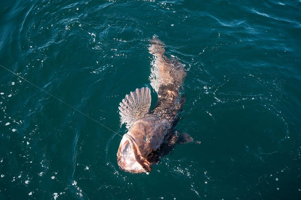 halibut fishing charters sitka alaska, sitka fishing charters