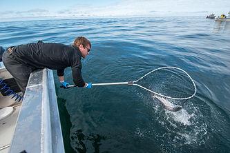 Sitka Alaska Fishing Guides