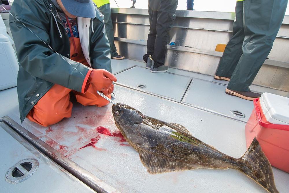 halibut fishing sitka alaska