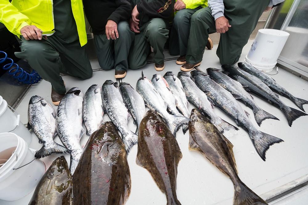 Salmon fishing charters in sitka alaska, sitka salmon fishing charters