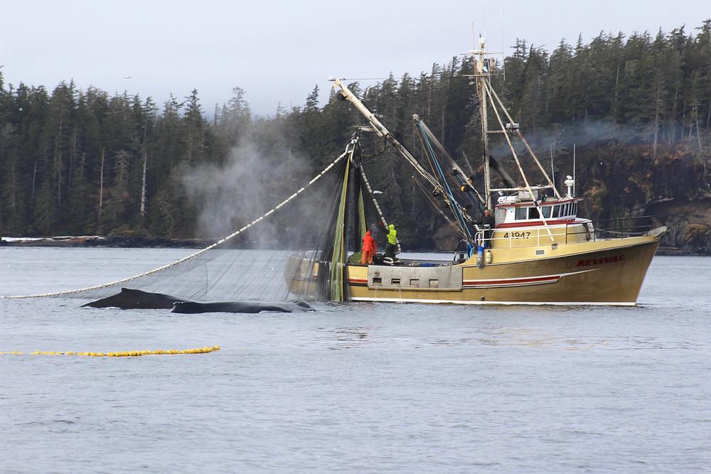 sitka fishing charters, sitka alaska fishing charters, sitka alaska fishing, sitka fishing, saltwater fishing sitka, sport fishing charters sitka alaska