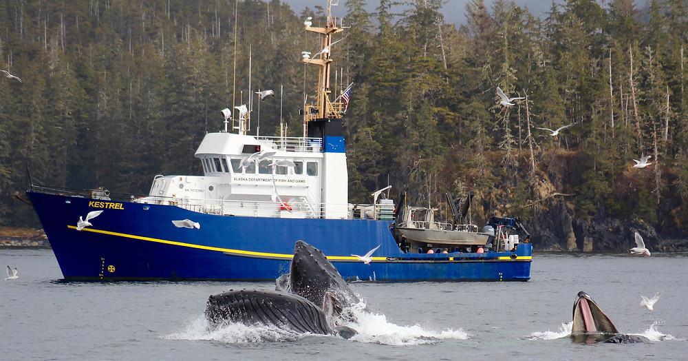 saltwater fishing sitka alaska, sitka fishing charters, sitka fishing, sitka alaska fishing