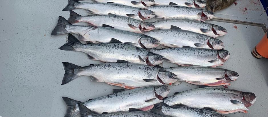 Sitka, AK Fishing Report: Silver Salmon Fishing (July 29 - August 14)
