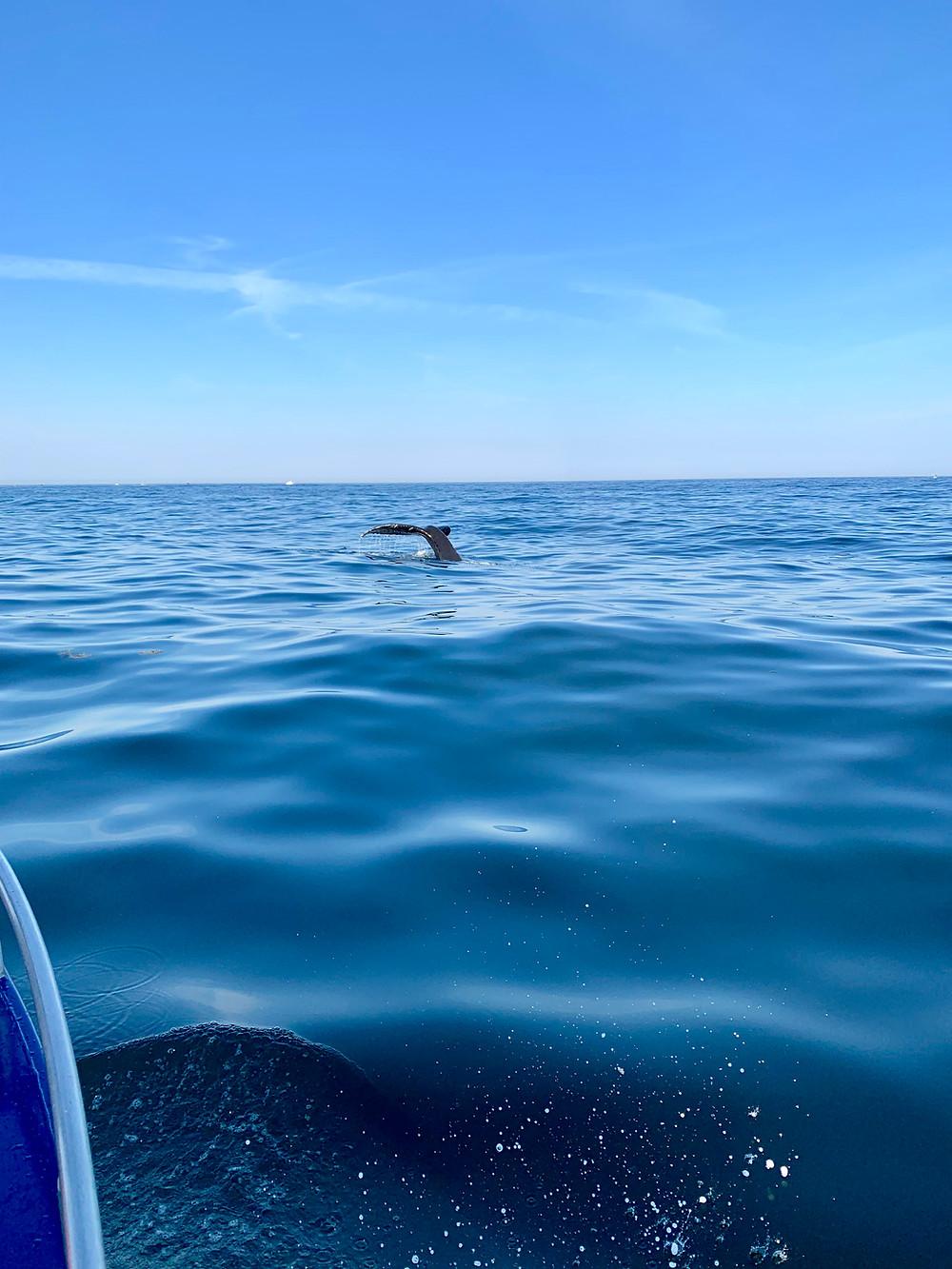 humpback whales Sitka Alaska