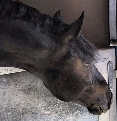 Coco #equestrianlife #equestrian #horse