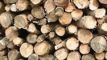 La madera, el recurso del futuro