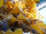 Seaweed_©JaapvanHal.jpg