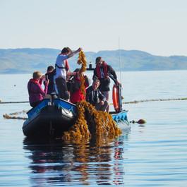 Trip to the SAMS seaweed farm © Jaap van Hal
