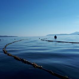 SAMS Seaweed farm © R. Clancy