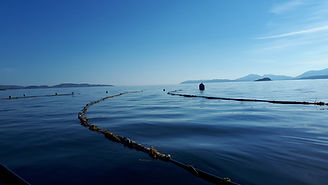 SAMS Seaweed farm_May2018_RClancy.jpg