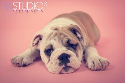 Studio3 Pet Photography