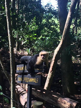 Manuel Antonio Monkey.jpg