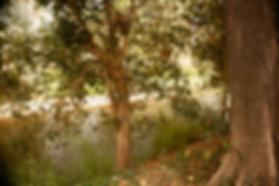 Bob_aug_2019 - 17.png