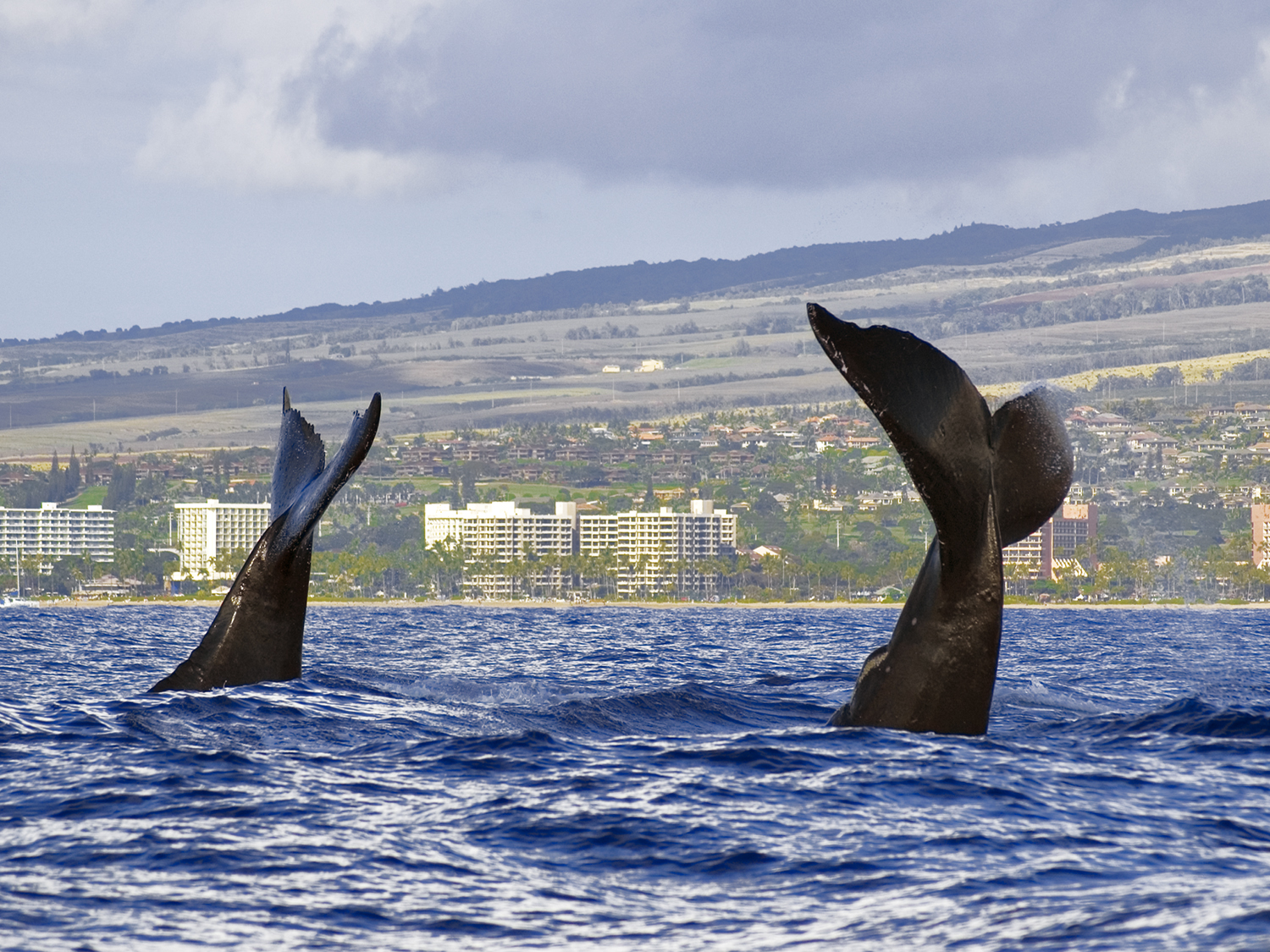 TAILS OF KAANAPALI
