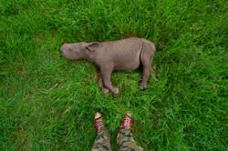 Baby Kitui