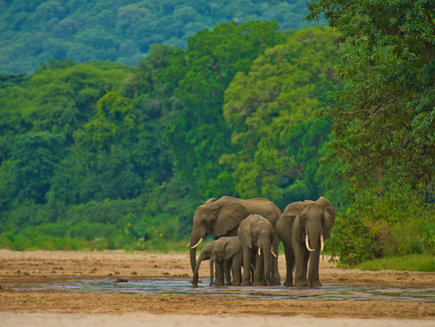 MANYARA ELEPHANTS