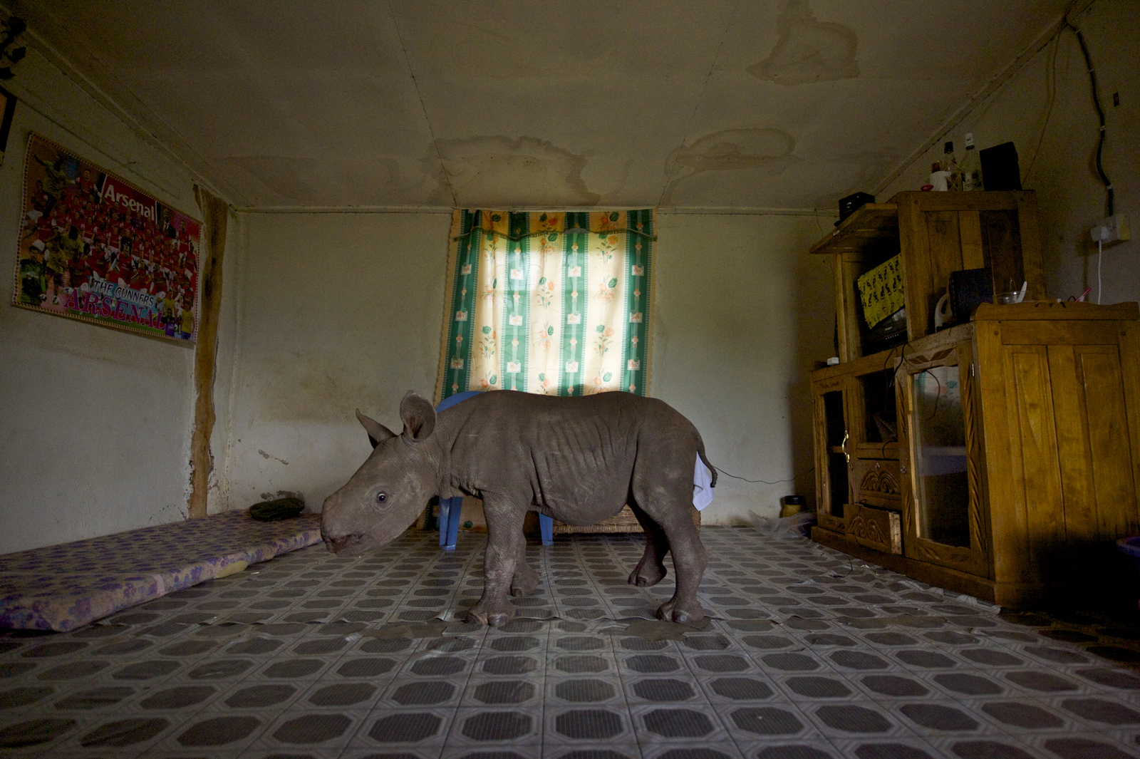 Living With Rhinos
