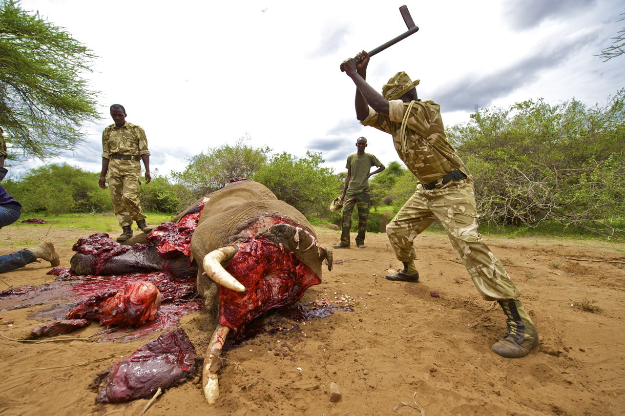 The Kenya Wildlife Service