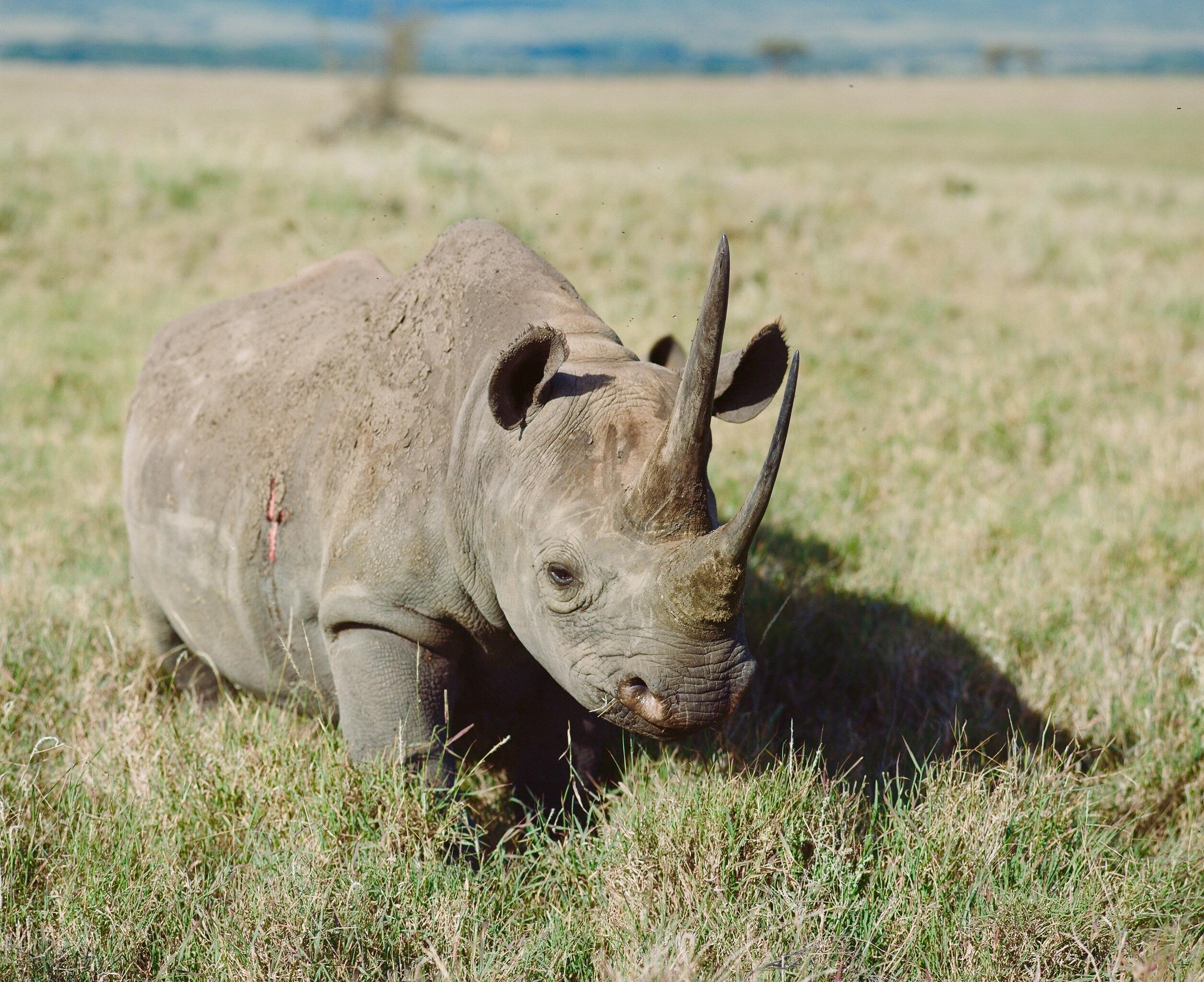 Black Rhino Charge