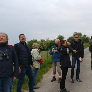 Marche ornithologique