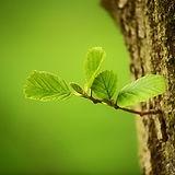 trees-2987303_640.jpg