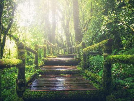 Témoignage Diète de Forêt