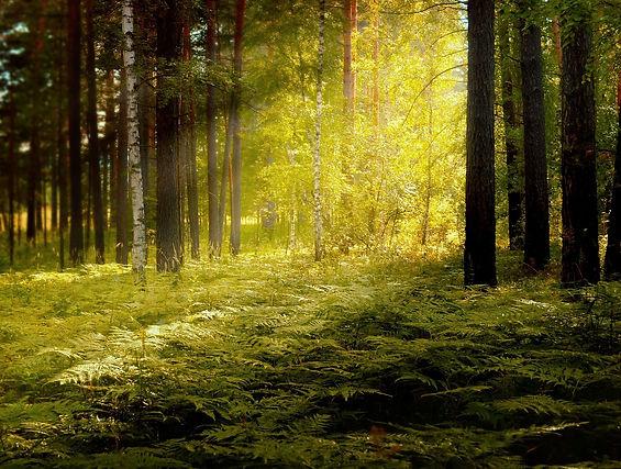 forest-314325_1280.jpg