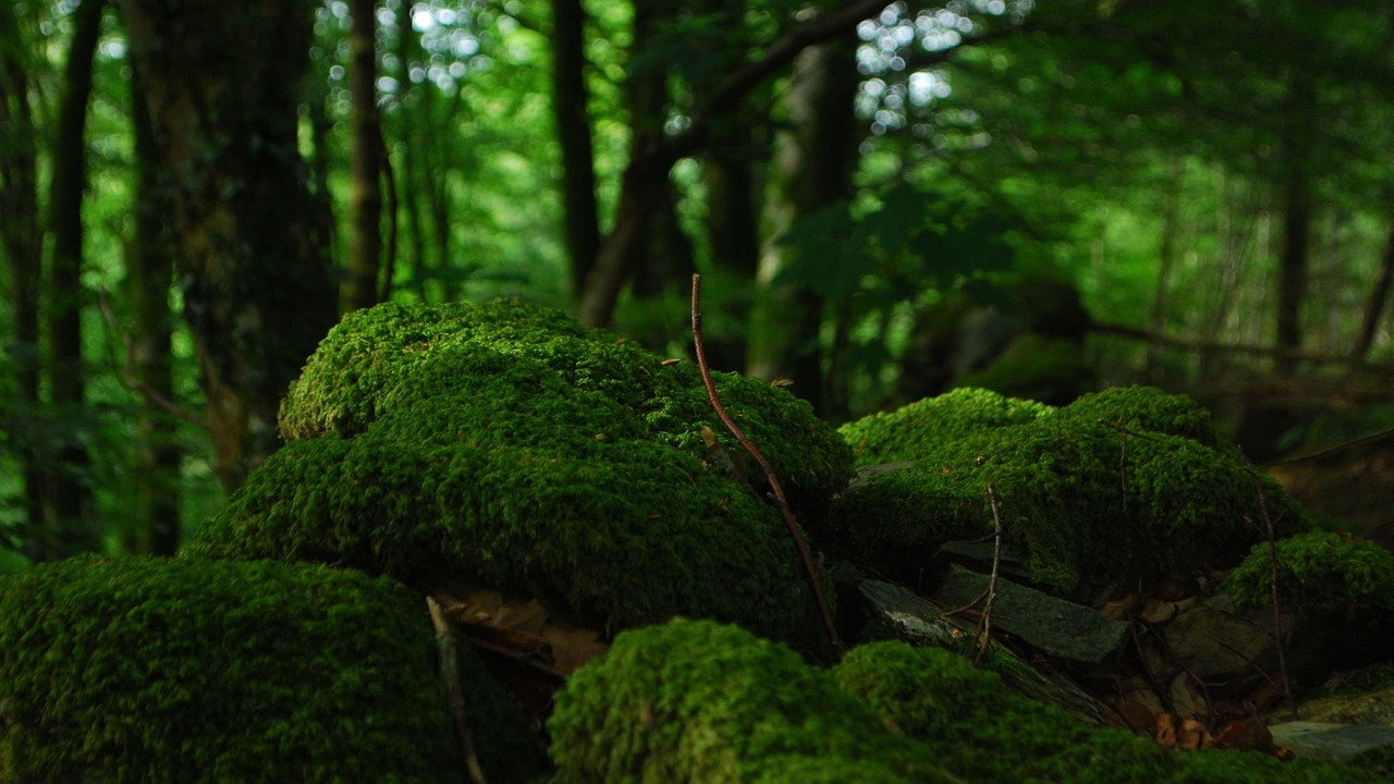 Diète de Forêt