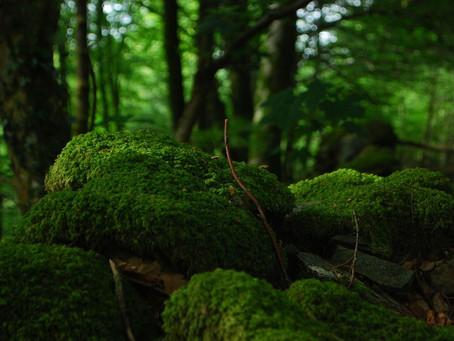 Diéter la Forêt ...