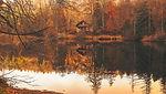 autumn-2021154_1920.jpg