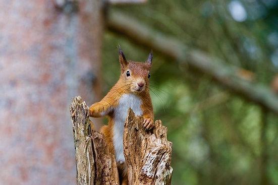 squirrel-2827760_640.jpg