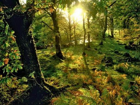 La Diète de Forêt n'est pas un jeûne
