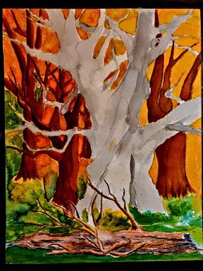 Ghost Tree Harvest
