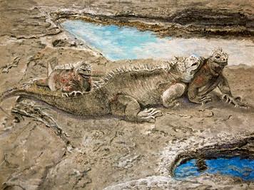 c Galapagos.jpg