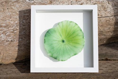 Framed Glass Lotus Leaf